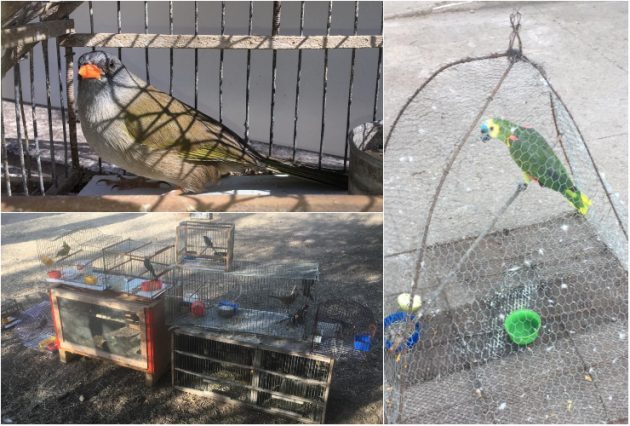 Más de 100 aves víctimas de tráfico ilegal se recuperan en el Centro de Conservación de Vida Silvestre