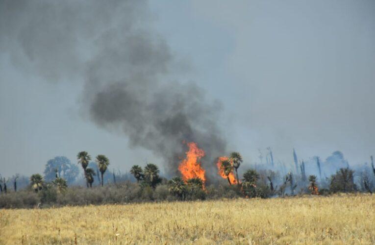 Recomendaciones ante el inicio de temporada de incendios forestales.