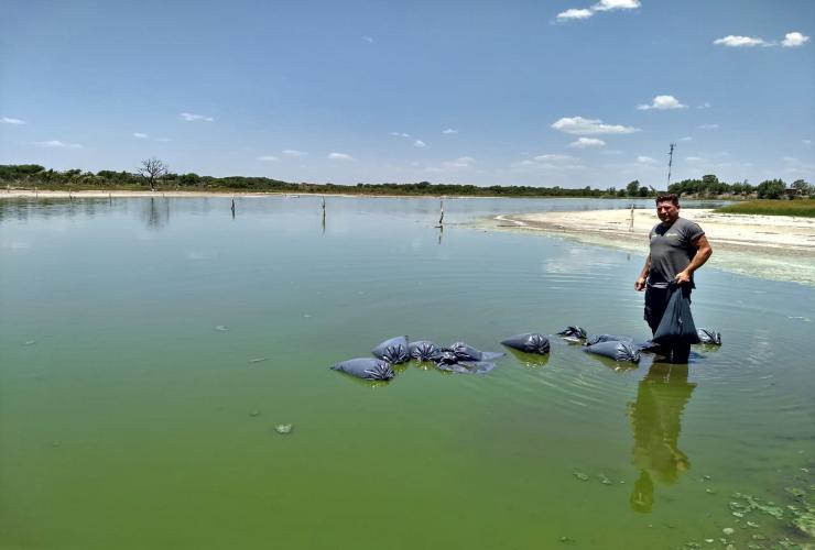 Siembran peces para reducir la población de mosquitos transmisores del dengue