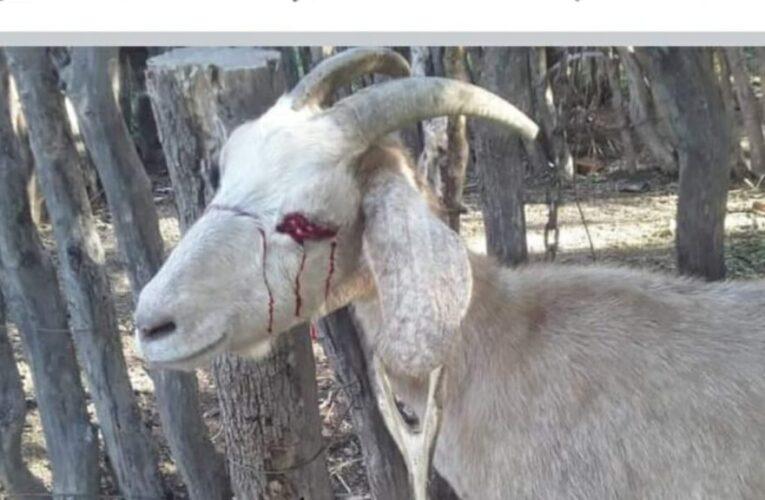 Torturaron y mutilaron animales en un paraje de San Luis