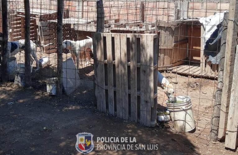 Buena Esperanza: La Policía allanó una casa por maltrato animal. Un hombre fue detenido