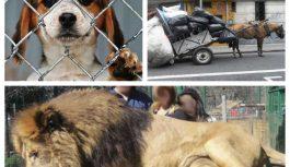 Maltrato animal: Qué se podemos hacer para defender sus derechos