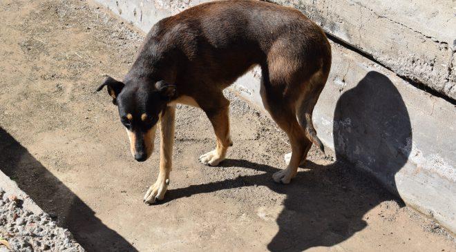 Buena Esperanza: Procesaron a un hombre por maltrato animal