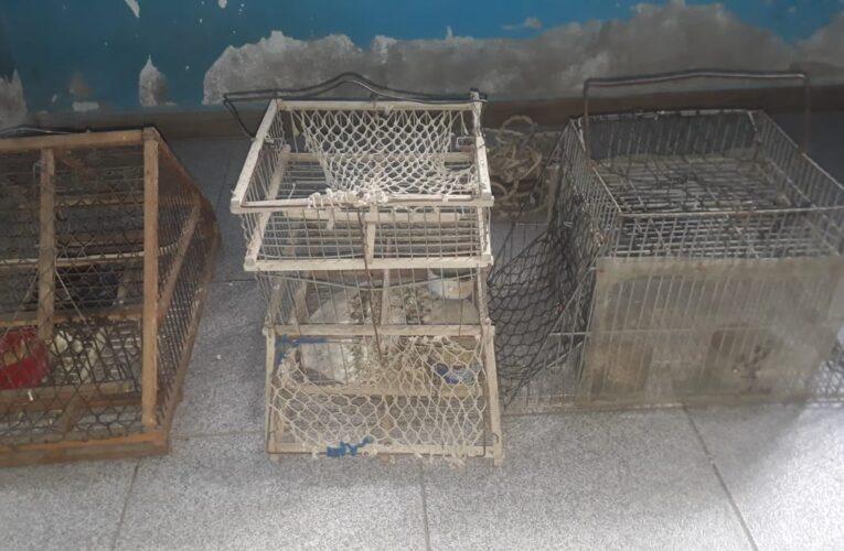 La Calera: Allanaron una vivienda, secuestraron aves silvestres y otros elementos